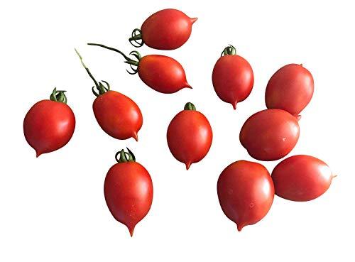 Tomate - Poitrines de Vénus - Petit 10 graines (Venusbrüstchen)