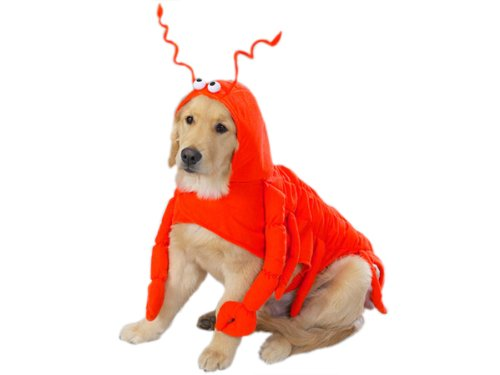 Casual Canine Lobster Paws Dog Costume, Large (fits lengths up to 20'), Red-Orange