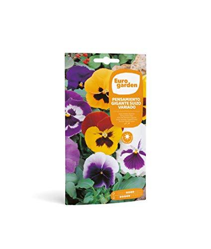 Eurogarden - Semillas de Flores (Pensamiento Gigante Suizo Variado)