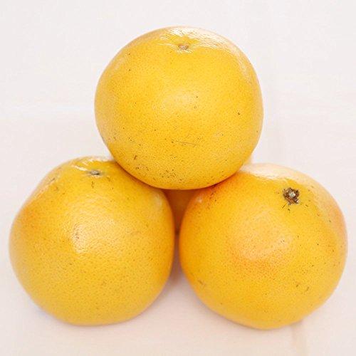 グレープフルーツ (赤) 10玉 新鮮