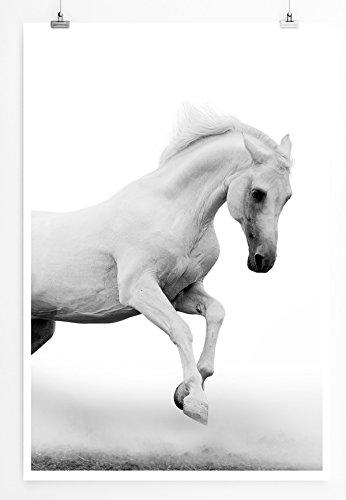 Eau Zone Home beeld - dierenfoto's - witte Arabische hengst bij mist - fotodruk in haarscherpe kwaliteit POSTER 90x60cm