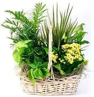 Angel Of Grace - Same Day Sympathy Flowers Delivery - Sympathy Flower - Sympathy Gifts - Send Online Sympathy Plants & Flo...