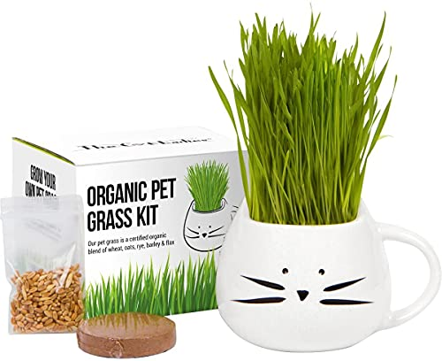 Cat Ladies Organic Cat Grass Growing Kit