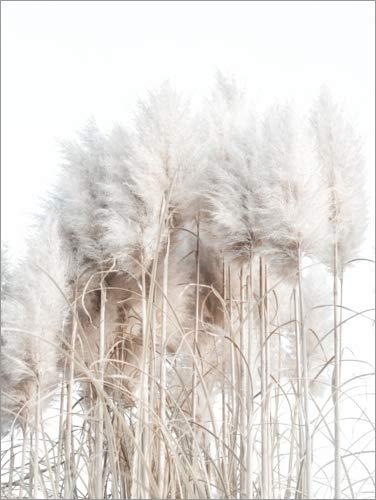 Poster 50 x 70 cm: Pampasgras I von Magda Izzard - hochwertiger Kunstdruck, neues Kunstposter