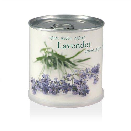 Blumen in der Dose - Lavendel