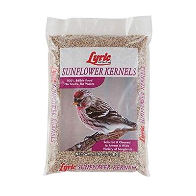 Lyric 2647445 Sunflower Kernels
