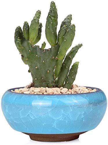 Bcaer Personalidad creativa Bonsai Micro Paisaje Micro Paisaje Pot Sampulent Flower Bonsai Pots Mini Escritorio para el hogar Mini acristalada Caja de plantas de cerámica Flowerpots Plantas Jarrón esp