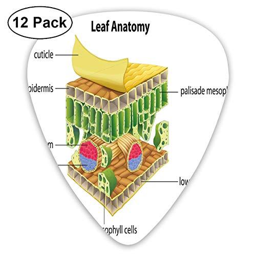 Gitaar Picks12pcs Plectrum (0.46mm-0.96mm), Anatomie Van Een Blad Namen Van De Microscopische Onderdelen Spongie Stoma Epidermis Lagen, Voor Uw Gitaar of Ukulele