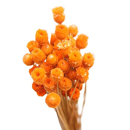 Flores Artificiales Decoracion Jarrones Naranjas flores artificiales decoracion jarrones  Marca Apofly
