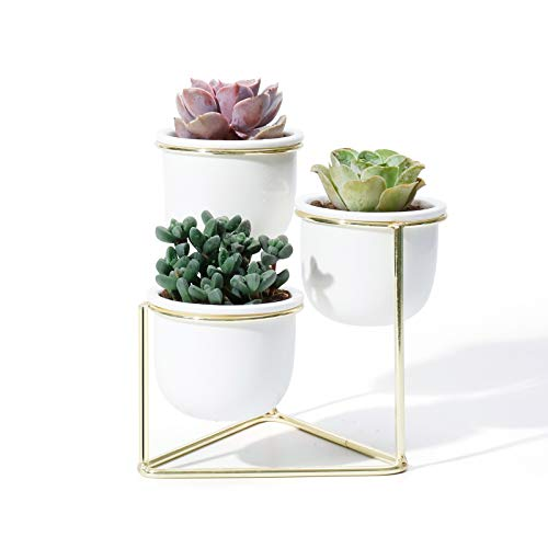 3 Piece Ceramic Succulent Planter Pots - 3 Inch Modern Century Indoor Cactus Container with Golden Metallic Stand - Suspended Base Legs and Watering Drain Holes