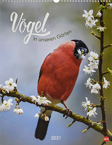 Vögel in unseren Gärten Posterkalender Kalender 2021