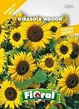 Sementi da fiore di qualità in bustina per uso amatoriale (GIRASOLE WAOOH)