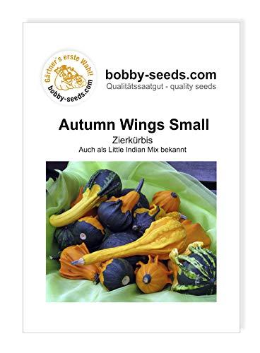 Autumn Wing S Zierkürbis von Bobby-Seeds, Portion