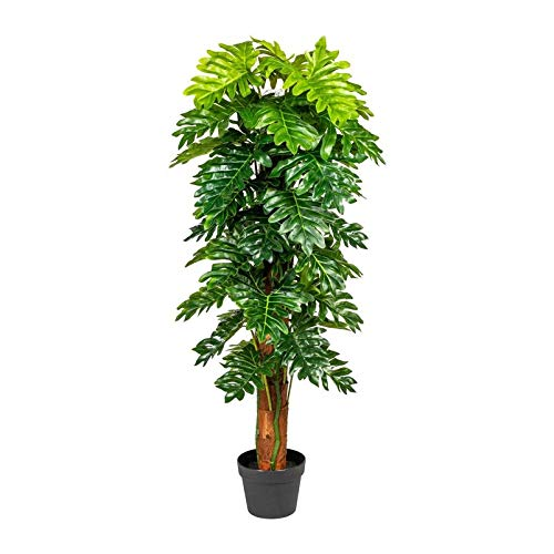 Pflanzen Kölle Monsterapflanze, grün, 120 cm, am Cocosstamm, mit Topf