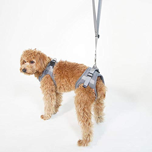 LVYONG Ältere Hundealte Hunde Hinterbeingurte Behinderte Verletzungen Ältere Hunde Hilfsgurte Rehabilitationsübungen Für Hinterbeine Mit Hundehilfsgurten-Grau_Xs Gehhilfe Für Hunde (Hinten) Tragegurt