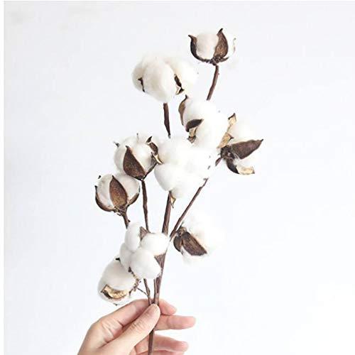 PiniceCore Natürliche Cotton Flower Branch Heim Garten Getrocknete Blumenschmuck Vase Anzeige Blumenbedarf Valentinstag Geburtstag Cotton