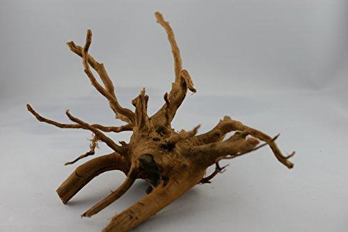 Wirbellosenzucht-Foltis Fingerwurzel, Rote Moorwurzel, Moorkienholz 15-25cm