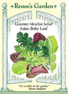 asian flavors for garden salad