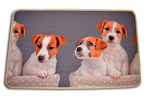 Centesimo Web Shop Tappeto Gommato Antiscivolo Multiuso Tappetino Passatoia Cucina Cuccioli Animali Cane Cagnolini - Beige - 50x80 cm