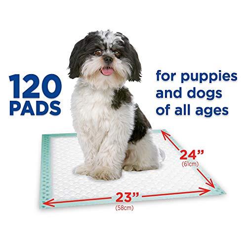 Member's Mark Pet Training Pads, 23