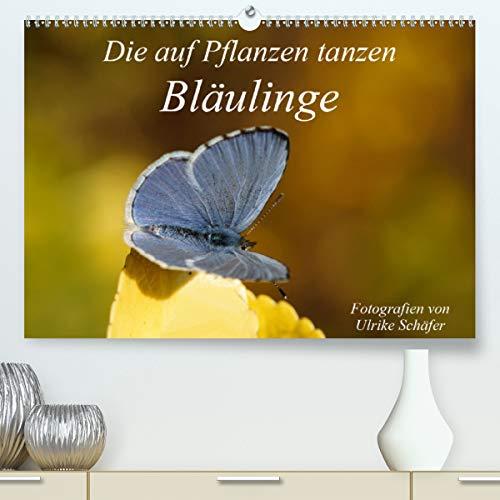 Die auf Pflanzen tanzen: Bläulinge (Premium, hochwertiger DIN A2 Wandkalender 2021, Kunstdruck in Hochglanz)