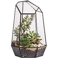 Terrario de forma geométrica de prisma, de cristal, irregular, 25cm de altura, de sobremesa, para plantas suculentas, helechos y musgo