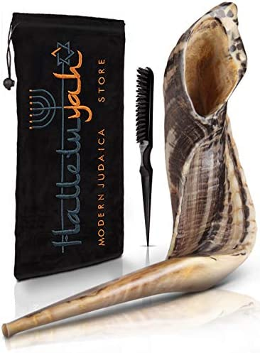 Ram Shofar From Israel 14 16 KOSHER ODORLESS Ram Shofar Horn Smooth Mouthpiece for Easy Blowing product image
