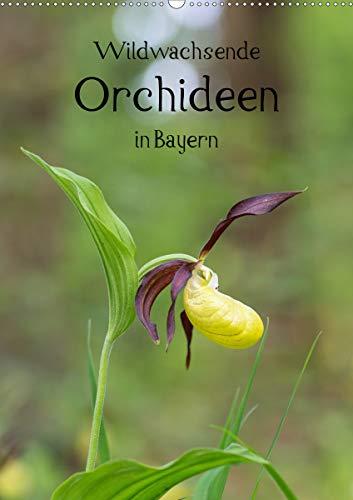 Wildwachsende Orchideen in Bayern (Wandkalender 2021 DIN A2 hoch)