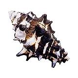 XCSM 8-10cm Tornillo de Engranaje Grande Natural Concha Marina Acuario pecera decoración Adornos artesanías hogar Boda Fiesta Cocina decoración Conchas