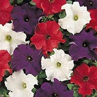 1,000 Pelleted Seeds Dreams Patriot Mix Petunia Seeds Bulk Seeds