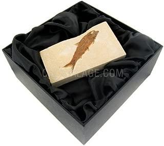 CrystalAge Knightia Alta - Fossil Fish Gift Box
