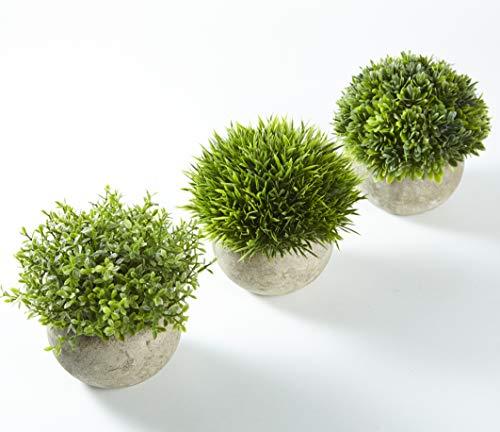 Jobary Plantas