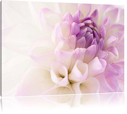 Traumhafte lila weiße Blüte Format: 100x70 cm auf Leinwand, XXL riesige Bilder fertig gerahmt mit Keilrahmen, Kunstdruck auf Wandbild mit Rahmen, günstiger als Gemälde oder Ölbild, kein Poster oder Plakat