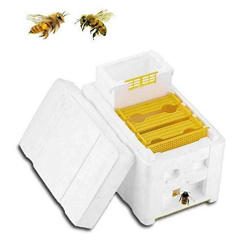 Colmena de cosecha - Caja de polinización de abejas,