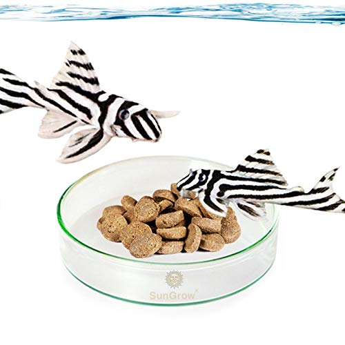 SunGrow Glass Bottom Feeder Dish, 2.5 Inches Wide, 0.5 Inches Deep, Easily...