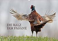Emotionale Momente: Die Balz der Fasane / CH-Version (Wandkalender 2022 DIN A2 quer): Die Balz der Fasane ist exotisch und dramatisch zugleich. Ingo Gerlach GDT hat dies in wunderschoenen Bildern festgehalten. (Monatskalender, 14 Seiten )