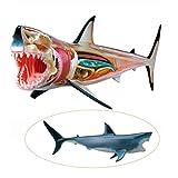 ZAMAX Modelo de Estudio Tiburón anatomía Modelo Collage Juguetes simulación Animal biológico Desmontable 20 Partes de órgano de tiburón anatomía Modelo de enseñanza médica