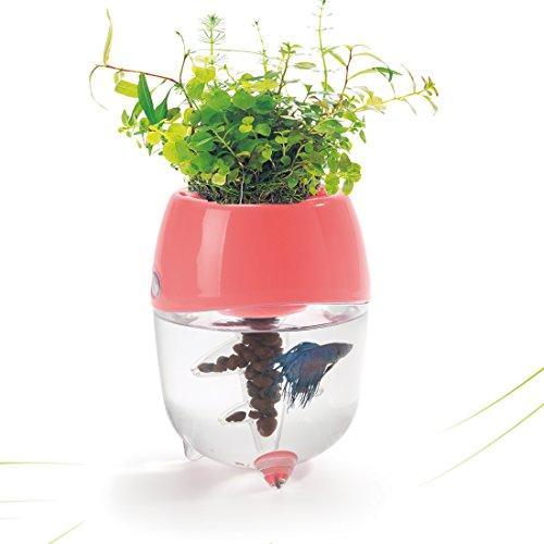 Aquaponic Aquarium, für Kampffische, mit Übertopf Deckel, Ökosystem für Pflanzenwachstum
