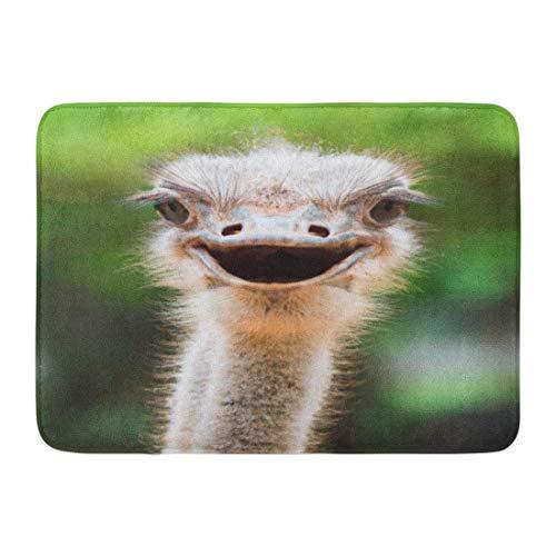 Fußmatten Bad Teppiche Outdoor/Indoor Fußmatte blau Tier Strauß Kopf Closeup lustige Wildlife Gesicht Emu afrikanischen Badezimmer Dekor Teppich Badematte