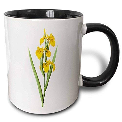 Reroute Vintage Watercolor Floral Yellow Flag Iris Pseudoceros Two Tone Black Mug 11 Oz White