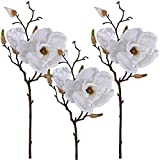 Winlyn 3 Pcs Silk Magnolia Flowers with Buds Branch Artificial Magnolia Blooms Wedding Flowers Bouquets Floral Stems in White 19' Tall for Vase Floral Arrangement Table Centerpiece Home Decor