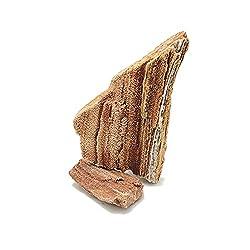 Petrified Wood Fossil Wood Aquascape Hardscaping Guide