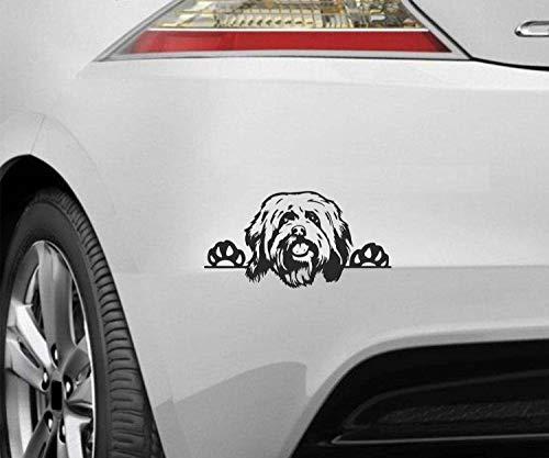 myrockshirt Peeking Dog Spähender Hund Havaneser ca.20cm Aufkleber,Sticker,Decal,Autoaufkleber,UV&Waschanlagenfest,Profi-Qualität,Wandtattoo