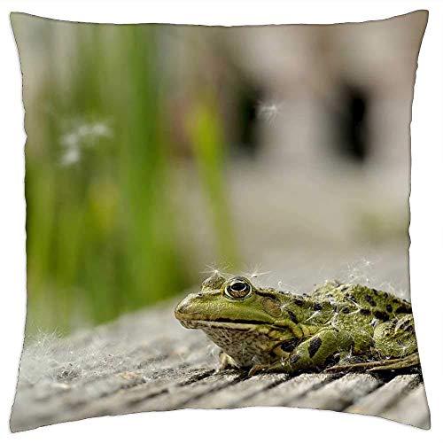 MAY-XCustom Kissenbezüge,Frosch Sitzen Tier Pappel Samen Teich Natur Garten Kissenbezug, Stilvolle Überwurf Kissenbezüge Für Zug Flugzeug Schlafen,45x45cm