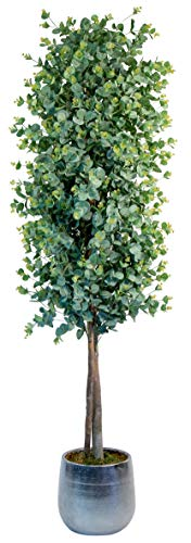 Maia Shop Eukalyptus mit natürlichen Stämmen, ideal für die Inneneinrichtung, Baum, künstliche Pflanze (180 cm), Eucalyptus