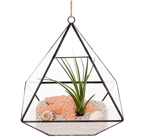Asvert 15,5cm Glasterrarium Pflanze Blumentopf Geometrische Diamant Desktop Garten Pflanzer von Mindful Design dekorative Terrarium Cube (Keine Pflanzen)