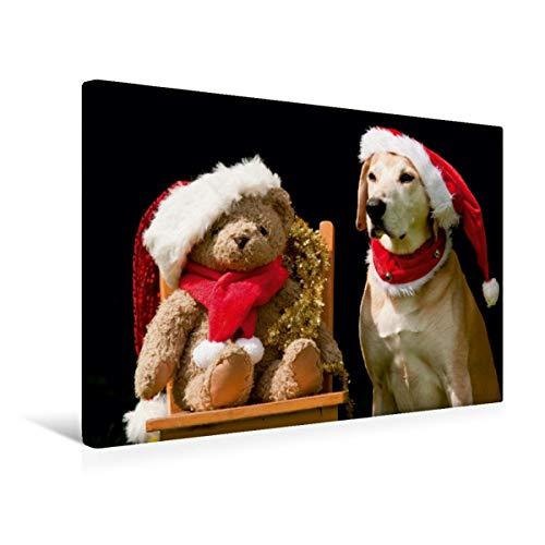 Calvendo Premium Textil-Leinwand 45 cm x 30 cm quer, Frohe Weihnachten!   Wandbild, Bild auf Keilrahmen, Fertigbild auf echter Leinwand, Leinwanddruck: Azawakh-Ridgeback mit Teddy Tiere Tiere