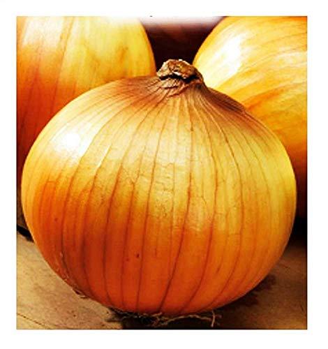 Graines d'oignon - légumes - allium cepa - cl002 - les meilleures graines de plantes - fleurs - fruits rares - oignons - idée cadeau originale - environ 4500 graines - excellente qualité density