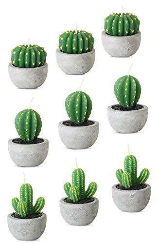 levandeo 9er Set Kerzen Kaktus je 5x7cm Tischdeko Dekoration Farbe Grün Wachskerze Kakteen Beton Topf