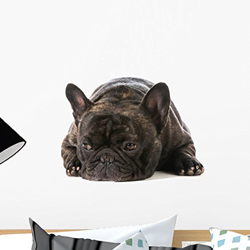 Wallmonkeys French Bulldog Wall Decal Peel and Stick Graphic (18 in W x 13 in H) WM48377